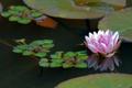 2_lotus26dragonfly_39400_3